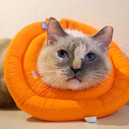 ドーナツエリザベスカラーナチュラルオレンジ